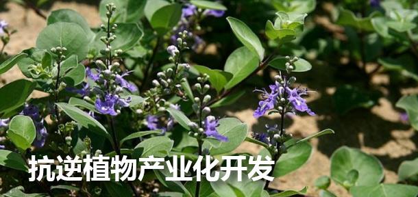 抗逆植物产业