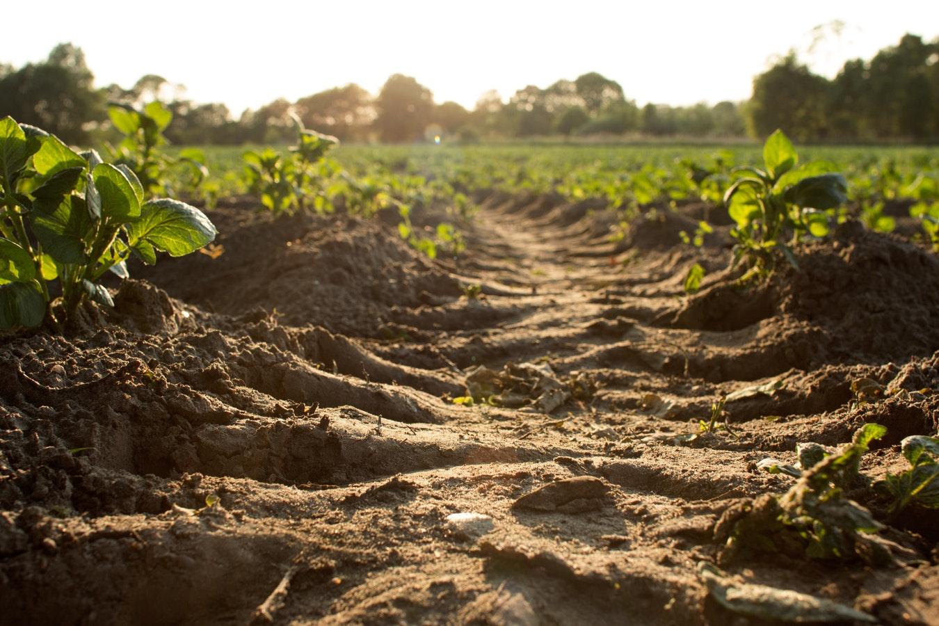 重金属污染对土壤微生物生态特征的影响研究进展