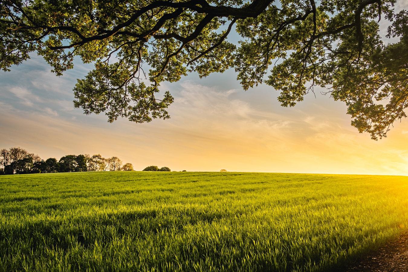 构建新型技术体系,支撑农业绿色发展